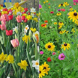 Extend your spring blooms with wildflowers