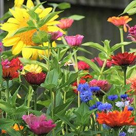 Fall Maximum Wildflower Seed Mix