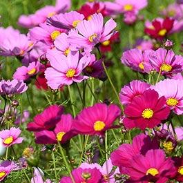 Individual Wildflower Species