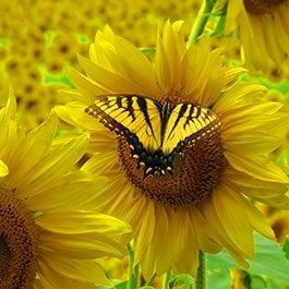 New to Wildflowers? Start Here