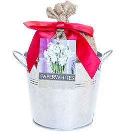 Paperwhite Bulbs and Kits