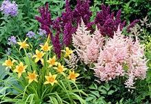 Perennial Wildflower Garden