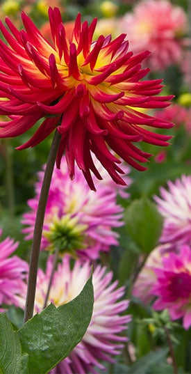 Spring Planted Bulb Videos