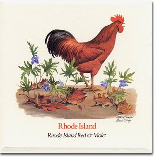 Rhode  Island State  Flower and Bird