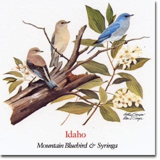 Idaho  State Flower and Bird