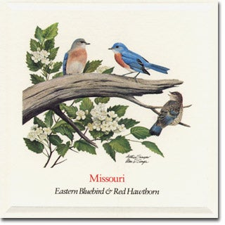 Missouri  State Flower and Bird