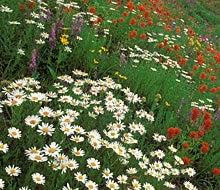 Western Wildflowers