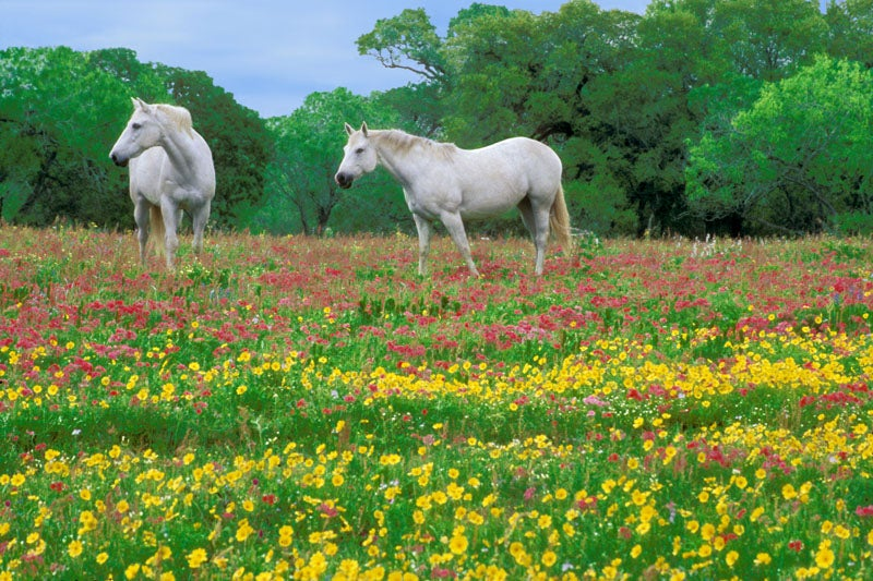 April in Texas. Two happy horses.