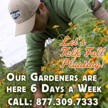 Let's Talk Fall Planting