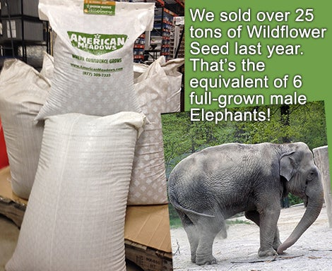 We sold over 25 tons of Wildflower Seed last year.