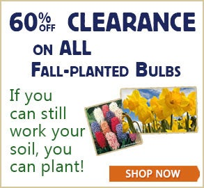 60% off Clearance on all Fall Planted Bulbs