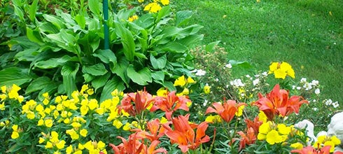 Hostas and Lilies
