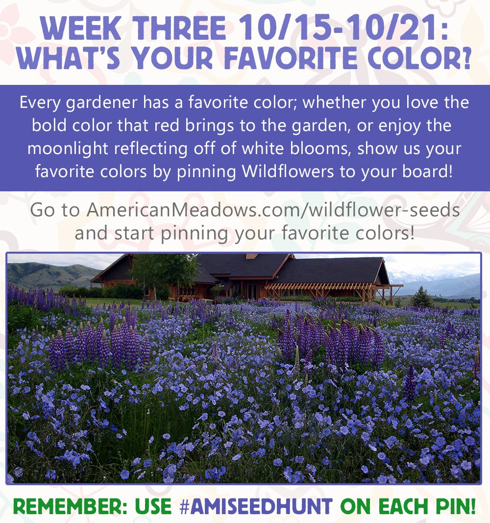 Week Three of the Contest: What's Your Favorite Color?