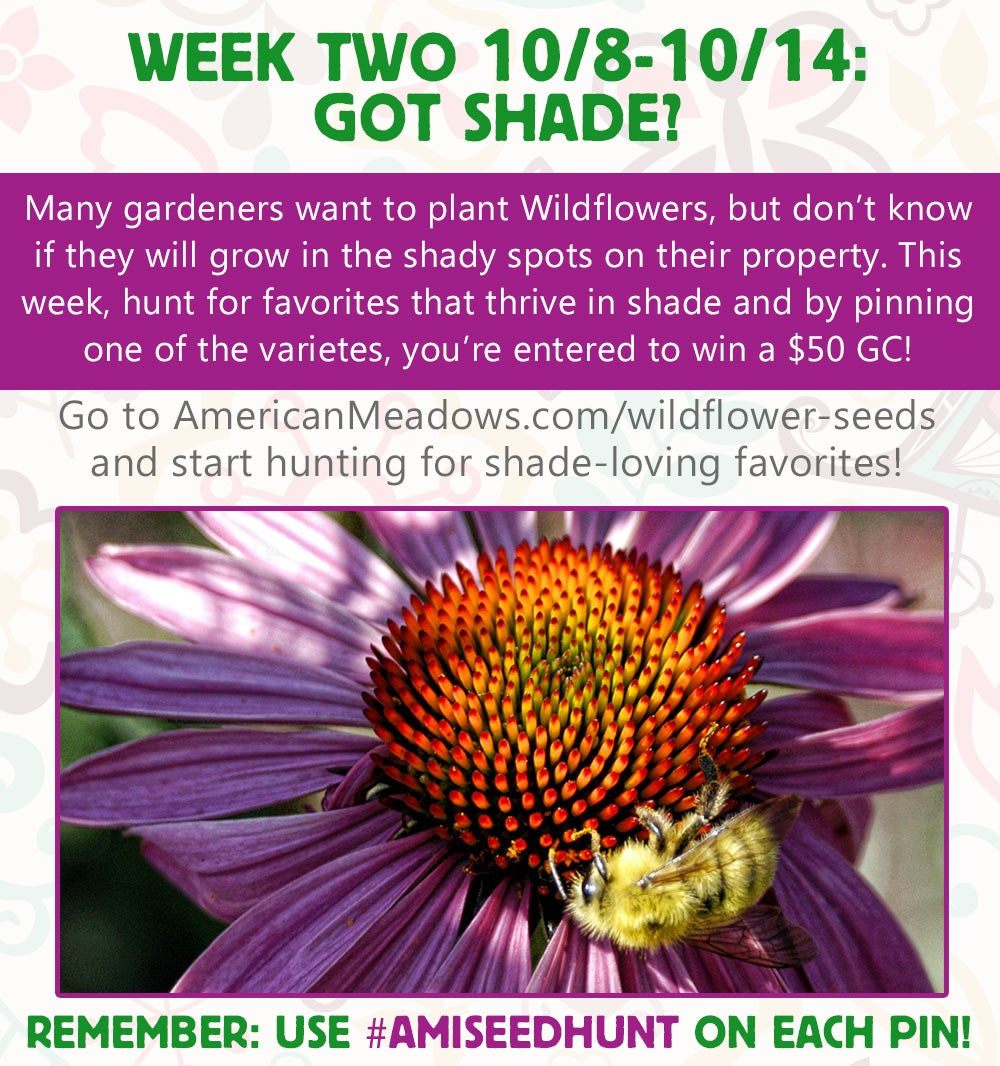 Week Two of the Contest: Shade-Loving Wildflowers