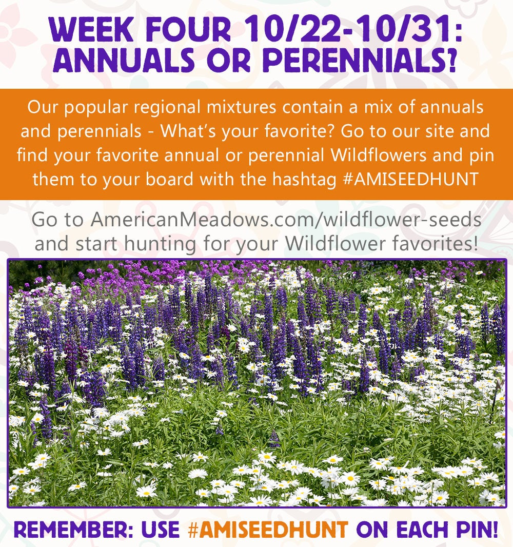 Week four of the contest: Annuals or Perennials?