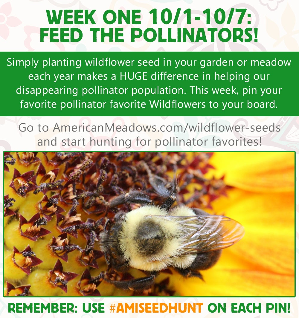 Week One of the Contest: Feed the Pollinators!