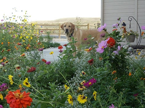 Mixed Wildflower Seeds