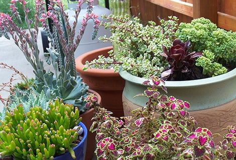 succulents-containers