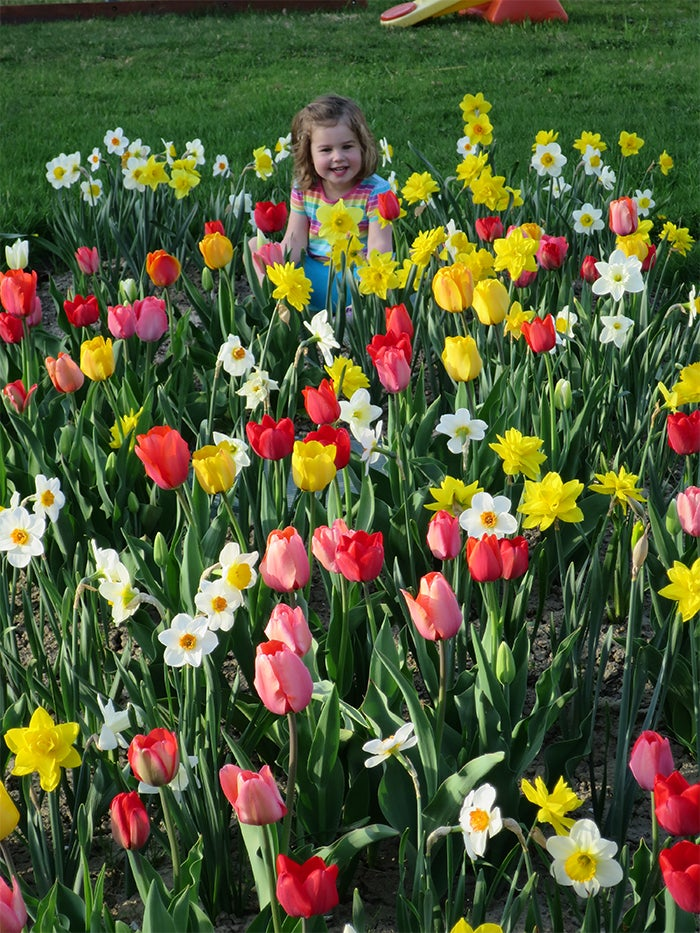 Daffodils_Tulips_-_May_2015_-_Erin_Morrissette__11_ copy