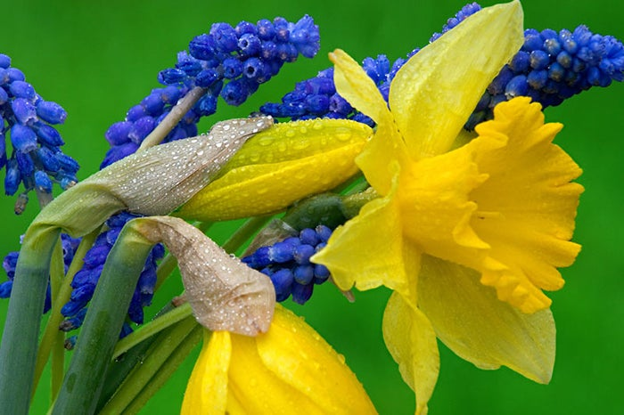 Get This Look Hyacinths And Daffodils