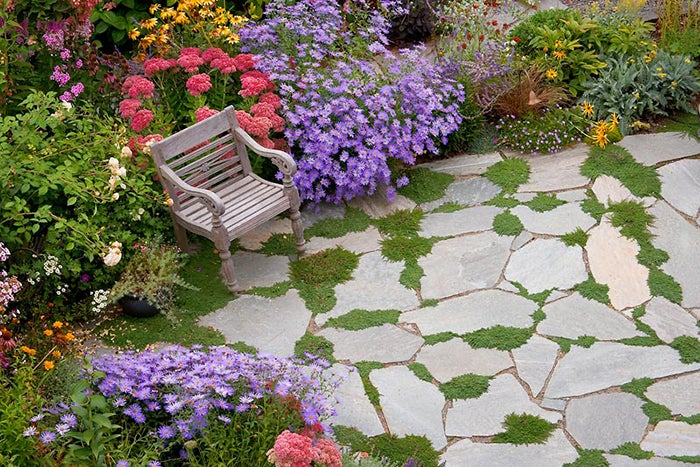 Plant Perennials Instead Of Mums This Fall