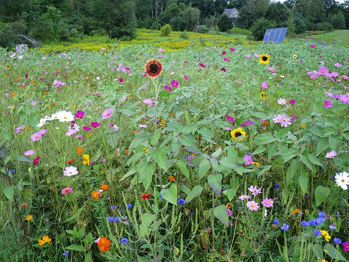 wildflower-meadow-11-endaugust