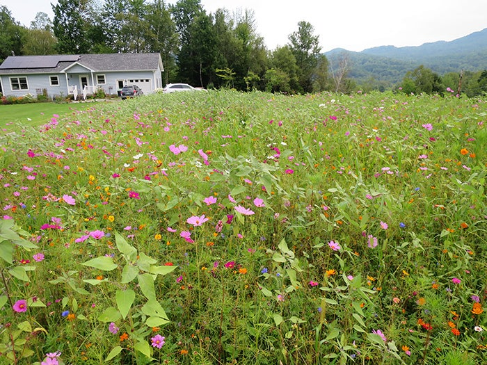 wildflower-meadow-12-endaugust