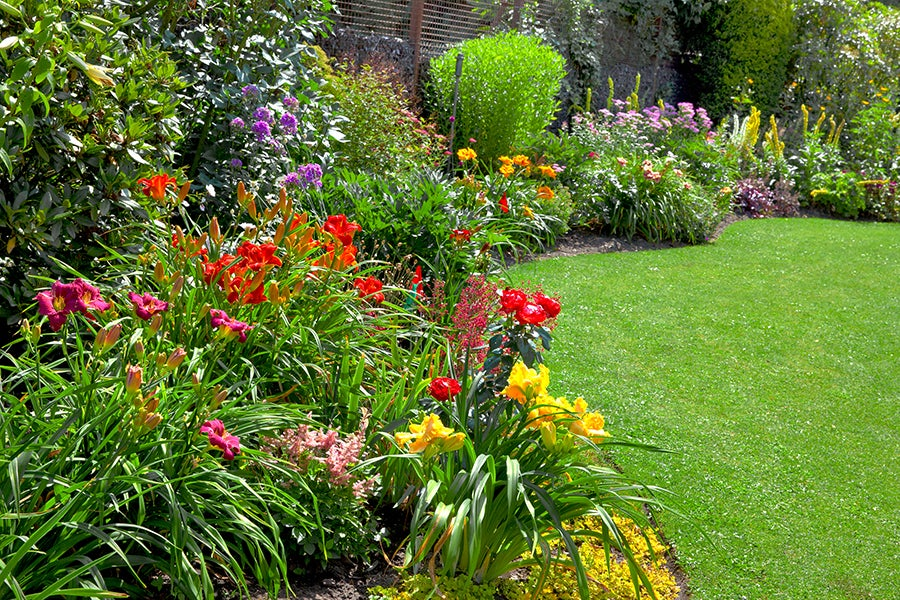 Keep your garden weeded and debris-free to help prevent harmful insects from destroying your plants.
