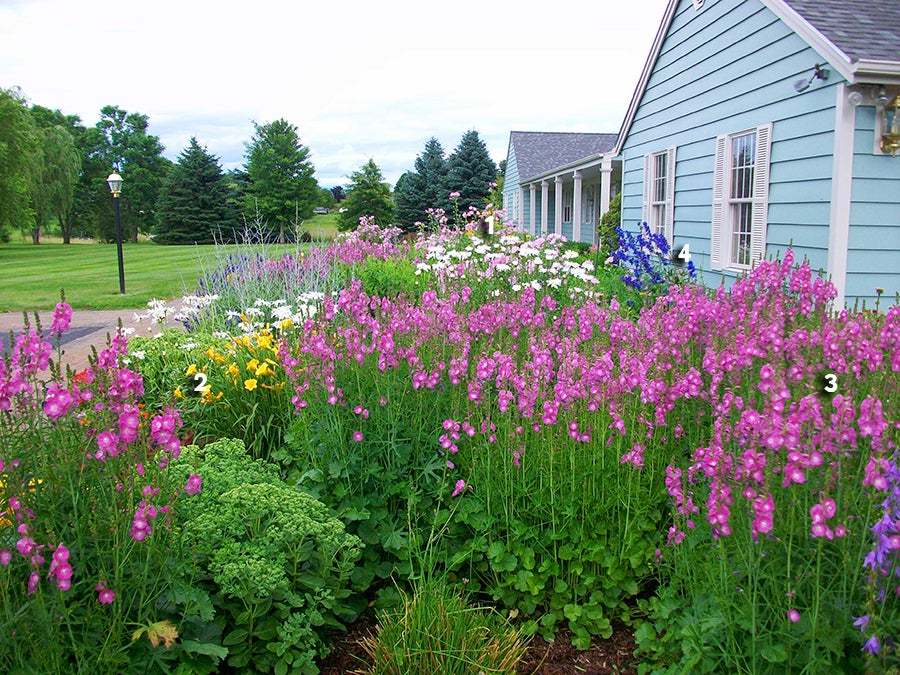 Get This Look Perennial Garden Bursting In Blooms Spring Through Fall