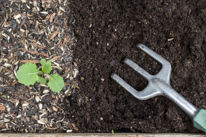 Scrape away the debris on top of garden planter soil before turning in amendments.
