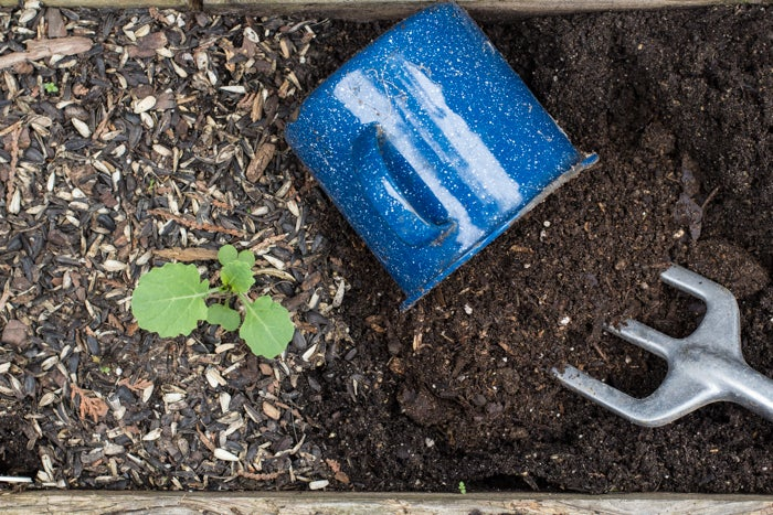 Recharge older soil in a planter with compost or slow-release fertilizer before re-planting