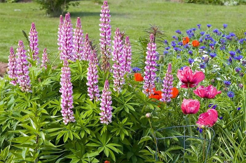 Why Plant Perennials Top 3 Reasons We Love Perennials American