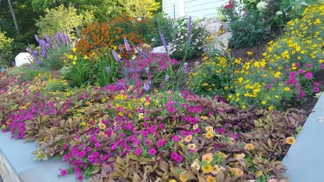 landscape design with annuals