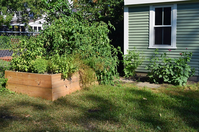 raised vegetable bed in city garden