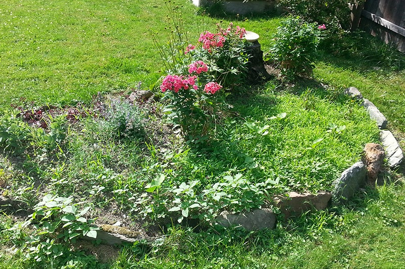 perennial garden bed with weeds