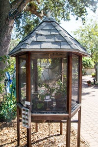 screened butterfly house for raising caterpillars
