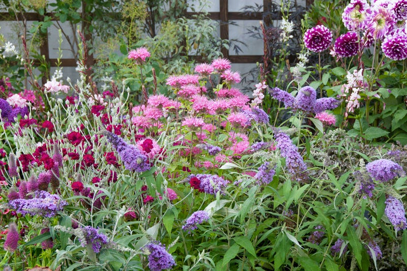 fragrant flower garden: butterfly bush and bee balm