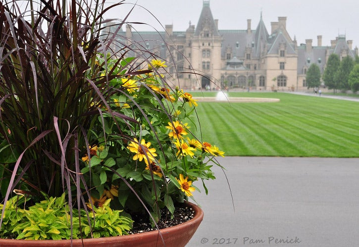 Container garden in front of the Biltmore house.