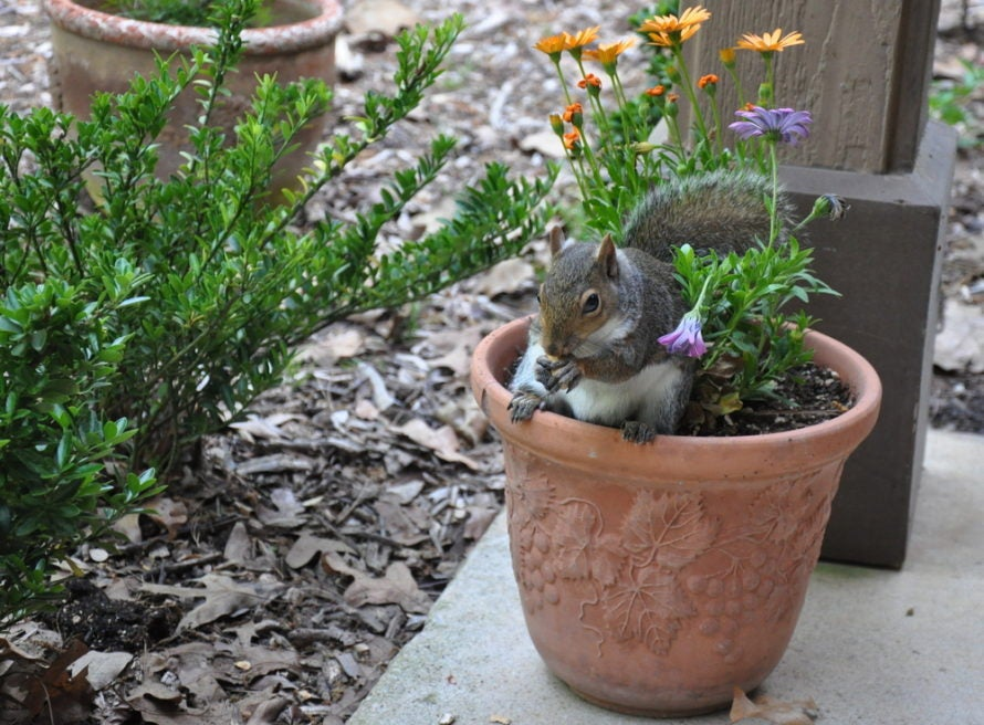How To Deter Squirrels From Eating Your Fall Bulbs