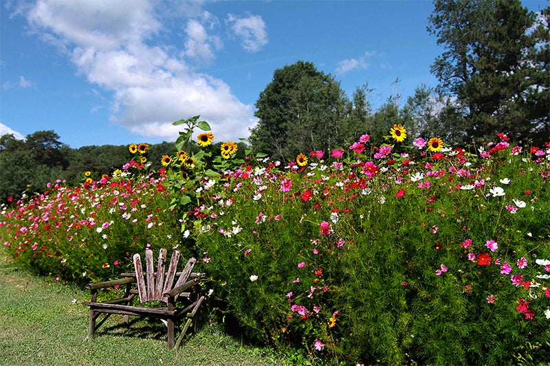 regional wildflower seeds - annuals