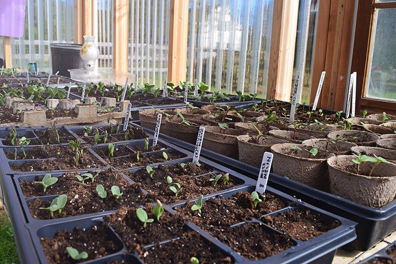 homesteading - rows