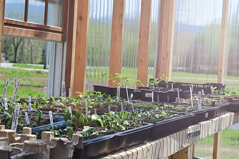 homesteading - seedlings