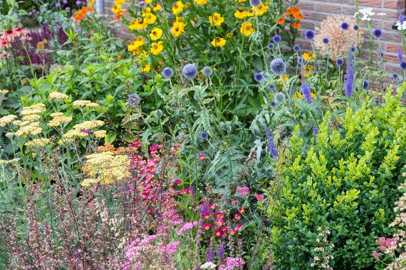 june planting: garden