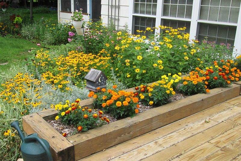june planting: marigolds
