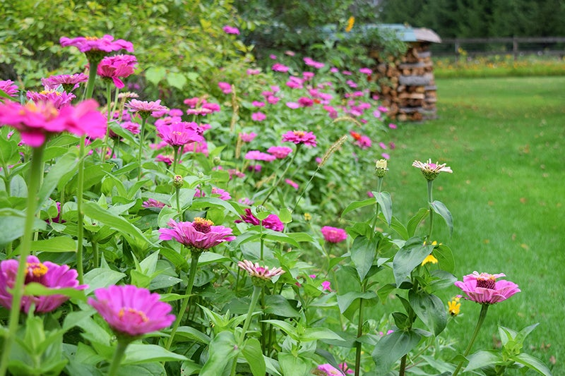 homesteading - zinnias, wood