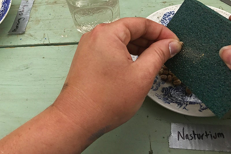 How To Scarify Seeds - sandpaper