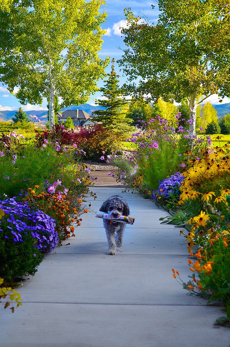 photo contest winners: dog on sidewalk