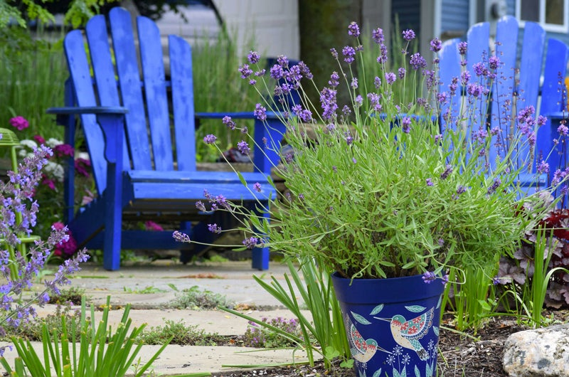 2018 Garden Trends: Lavender in Containers