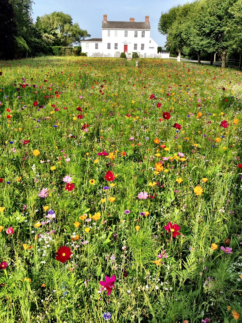 Best Wildflower Combinations - Wildflower Lawn at the Wallace House