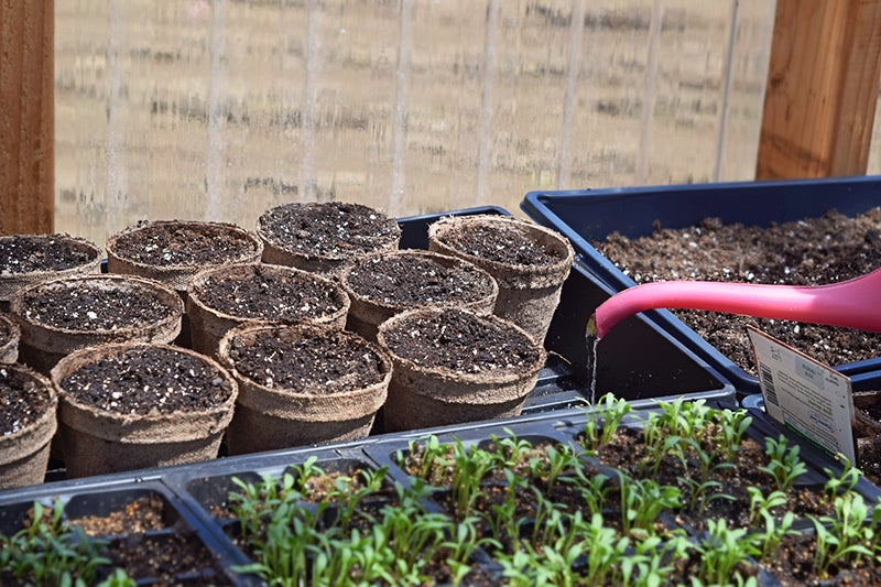 How to Start Seeds - Seedlings